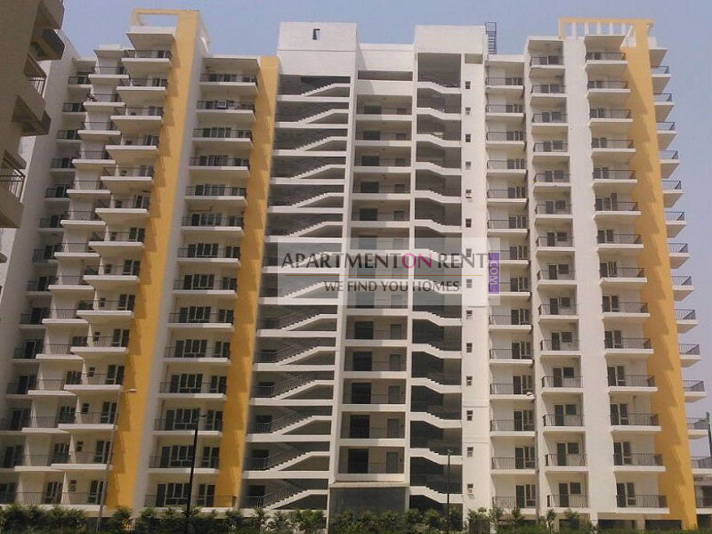 1 BHK Apartment For Rent in Panchsheel Hynish